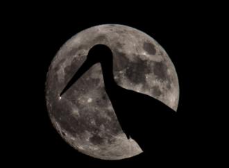 Alcalá se suma a la Hora del Planeta con una observación lunar y la ruta de las cigüeñas