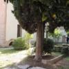 La presidenta Díaz Ayuso visita Alcalá para ver la rehabilitación del Convento de Capuchinos y el entorno de Demetrio Ducas