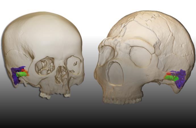 Demuestran que los Neandertales hablaban en un estudio en el que participa la Universidad de Alcalá