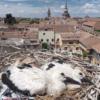 VÍDEO: Primer vuelo y primer aterrizaje del pollo de cigüeña de Alcalá