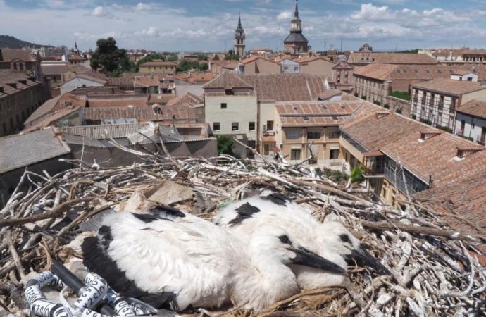 En Alcalá de Henares, con las cigüeñas, siempre es San Blas