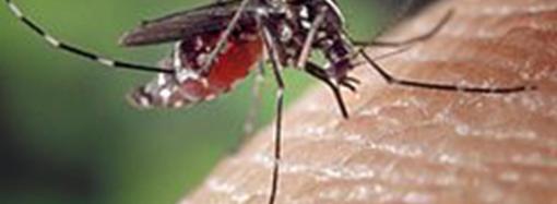 Guadalajara empieza a fumigar este miércoles de madrugada para controlar la población de mosquitos