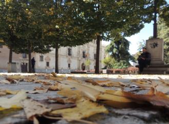 Por qué se caen las hojas y otras preguntas sobre las plantas en otoño