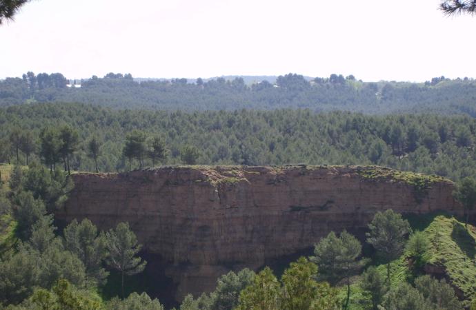 ¿Quieres plantar árboles en los Cerros y en el Camarmilla?