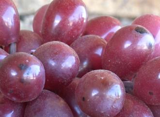 La Universidad de Alcalá usará matemáticas para estudiar la crianza de vinos