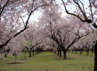 Quinta de los Molinos: almendros en flor en familia