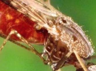 ¿Viaja a zonas con riesgo de malaria? Cuatro claves para mantenerse a salvo