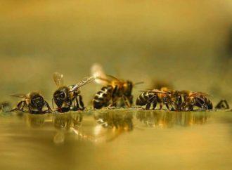 Fiesta de la miel y la apicultura este fin de semana en Azuqueca de Henares