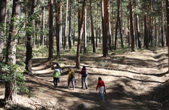Lo último en terapias antiestrés: «Baños de Bosque» en la naturaleza