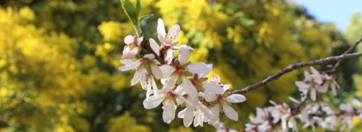 Rutas: tiempo de almendros en flor en la Quinta de los Molinos