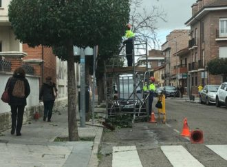 Continúan los trabajos de poda en San Fernando de Henares