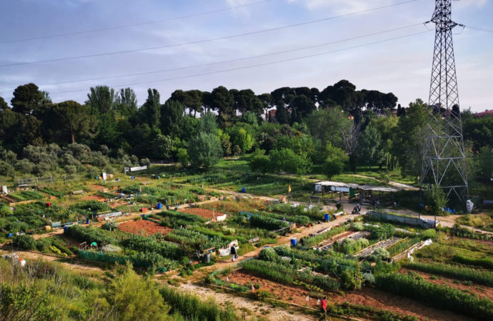 Azuqueca reabre los huertos urbanos de La Quebradilla