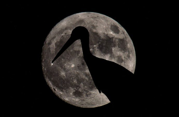 «Plena Moon»: el evento que rinde homenaje a la luna en todo el mundo llega al Corredor del Henares