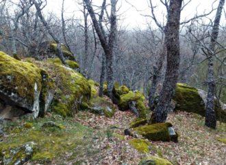 Fines de semana para conectar con la naturaleza en el Bosque de La Herrería en El Escorial