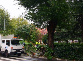 San Fernando de Henares cierra parques y espacios arbolados a consecuencia del temporal