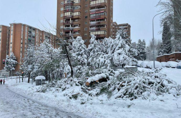 Desprendimientos en fachadas y cornisas o la caída de árboles los graves riesgos de los que advierten en Guadalajara