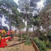 Azuqueca cierra de manera preventiva los parques de La Quebradilla y Los Almendros debido a los daños provocados por Filomena