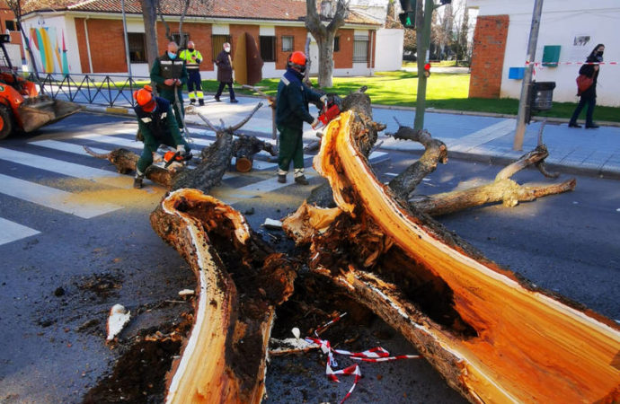 Azuqueca poda los árboles con daños irreparables por la borrasca Filomena