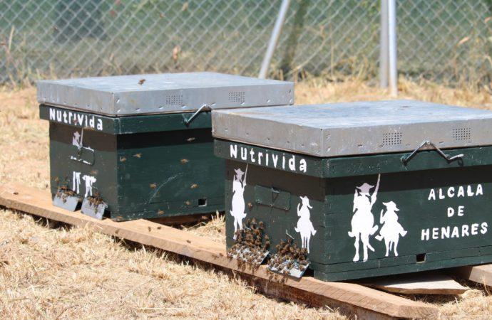 """La Isla del Colegio de Alcalá ya cuenta con nuevas colmenas de abejas y un nuevo espacio llamado """"Oasis Mariposas"""" para continuar con la estrategia de polinización de la zona"""
