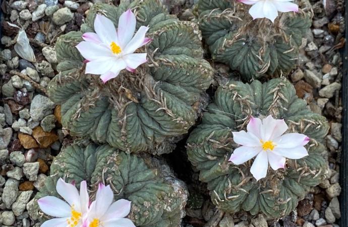 El alijo de cactus incautado en el aeropuerto de Alicante ya crece en el Jardín Botánico de Alcalá