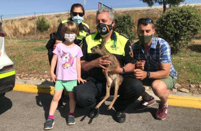 Rescatan una cría de corzo en Alcalá con la colaboración de la Policía Local
