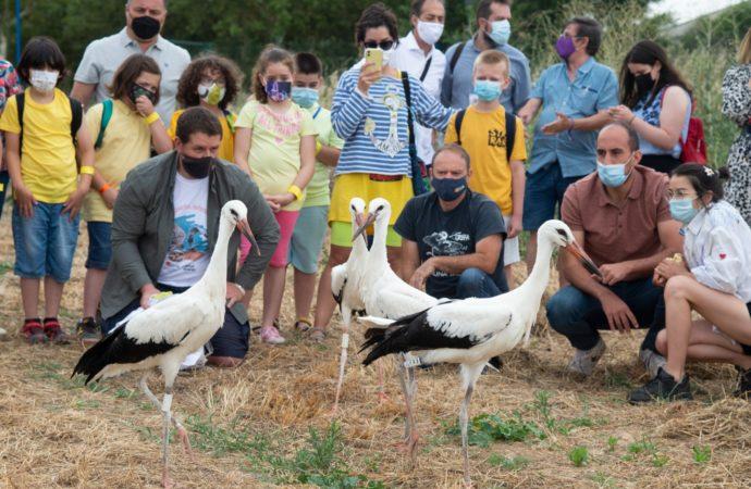 La Isla de Colegio de Alcalá acoge la tradicional suelta de cigüeñas de verano