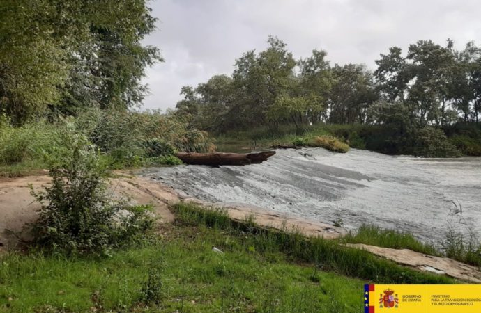La Confederación Hidrográfica del Tajo trabaja en el saneamiento y mejora del bosque de ribera del río Henares a su paso por Alcalá